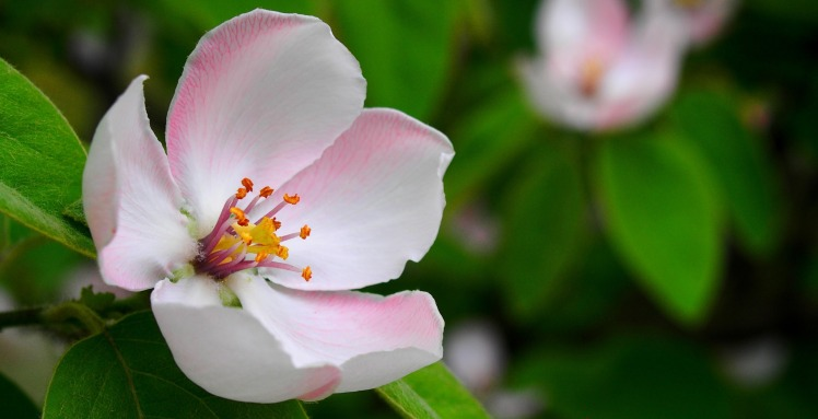 spring-1360468_1920
