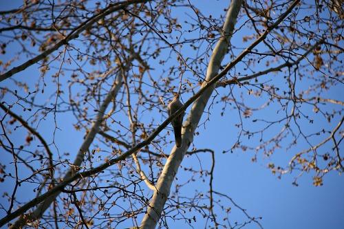 bird-1305927_1920